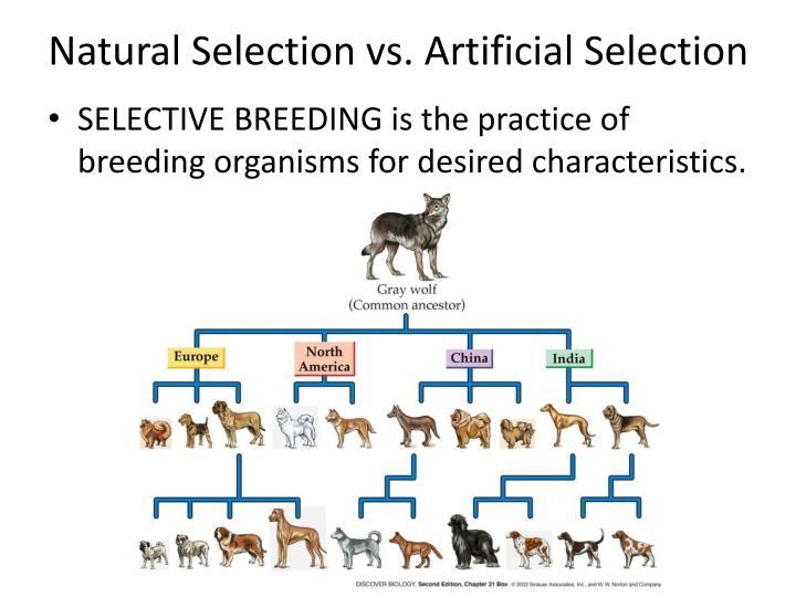 Natural Selection vs. Artificial Selection