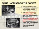 what happened to the bodies