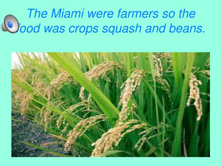 The Miami were farmers so the food was crops squash and beans.