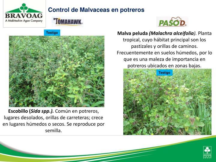 Control de Malvaceas en potreros