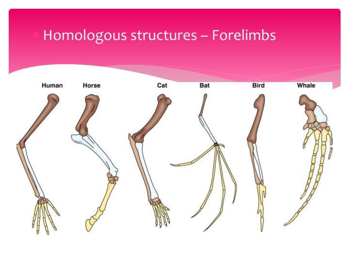 Homologous structures – Forelimbs