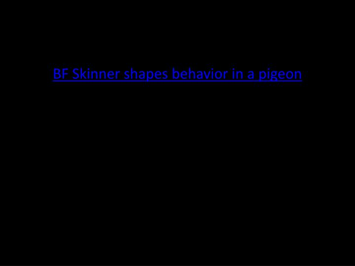 BF Skinner shapes behavior in a pigeon