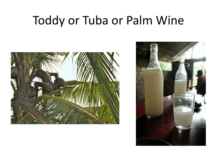 Toddy or tuba or palm wine