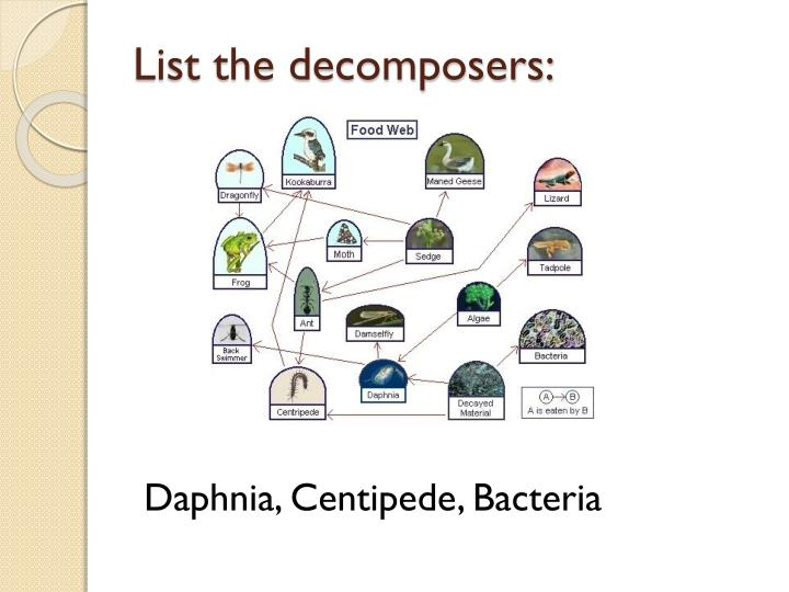 List the decomposers: