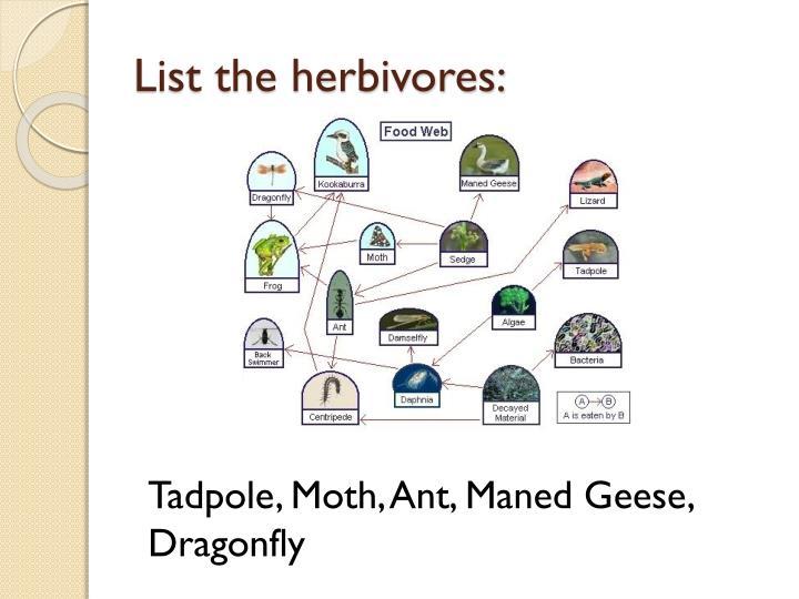 List the herbivores: