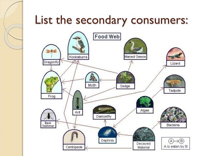 List the secondary consumers: