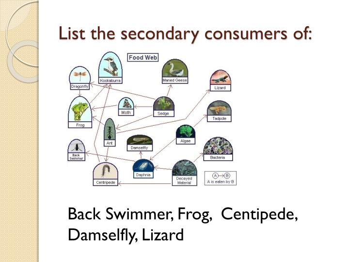 List the secondary consumers of: