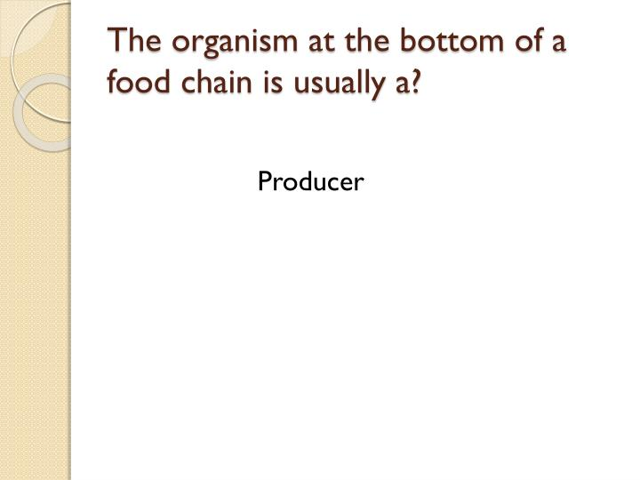 The organism at the bottom of a food chain is usually a?
