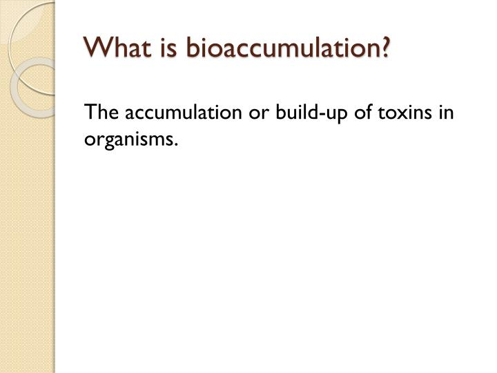 What is bioaccumulation?