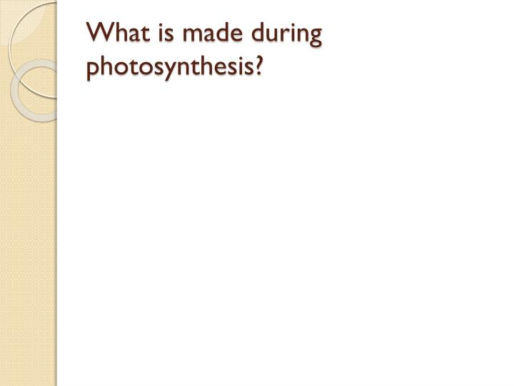 What is made during photosynthesis?
