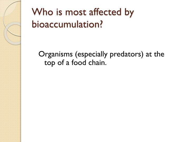 Who is most affected by bioaccumulation?