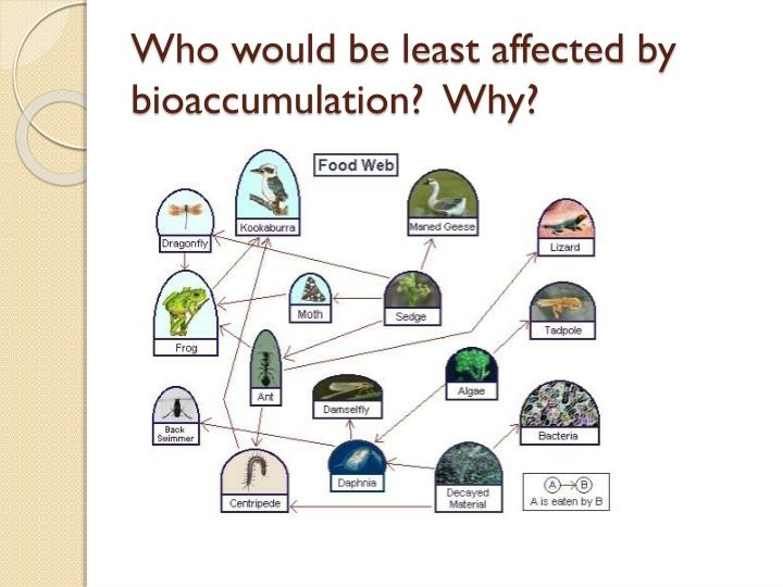 Who would be least affected by bioaccumulation?  Why?