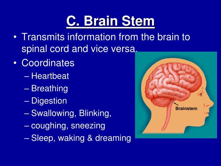 C. Brain Stem