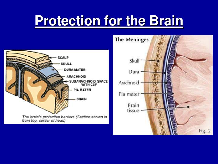 Protection for the Brain