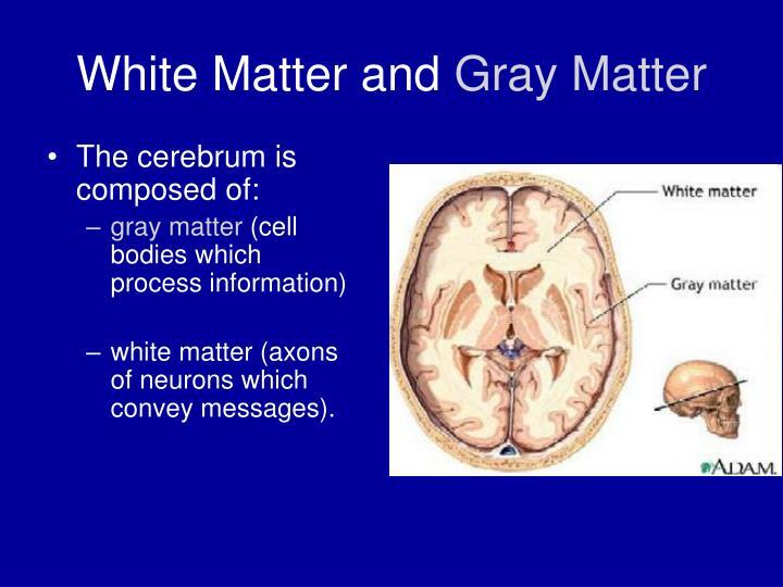 White Matter and
