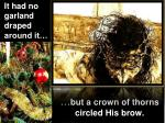 but a crown of thorns circled his brow