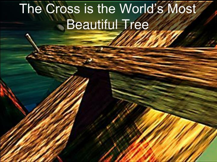 The Cross is the World's Most Beautiful Tree