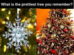 what is the prettiest tree you remember