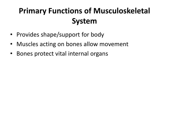Primary Functions of Musculoskeletal System