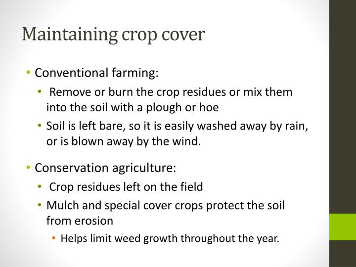 Maintaining crop cover
