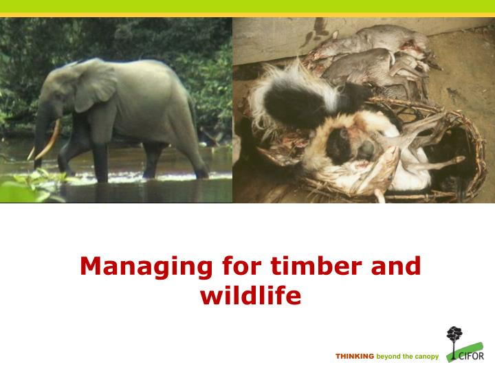 Managing for timber and wildlife