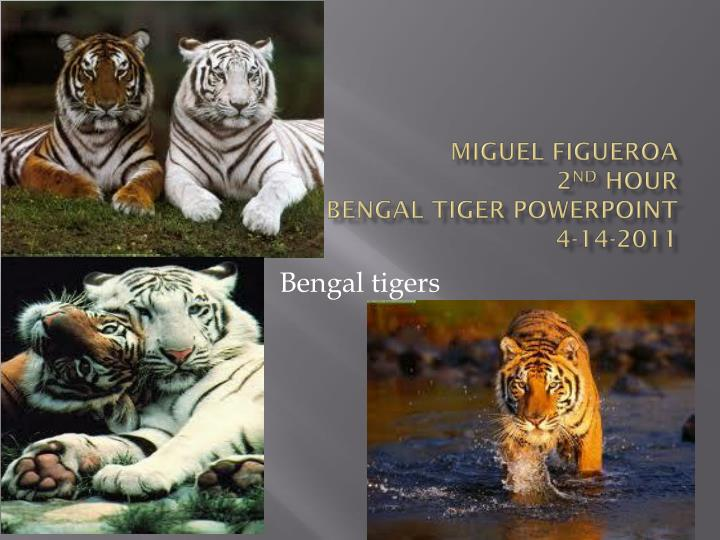 Miguel figueroa 2 nd hour bengal tiger powerpoint 4 14 2011
