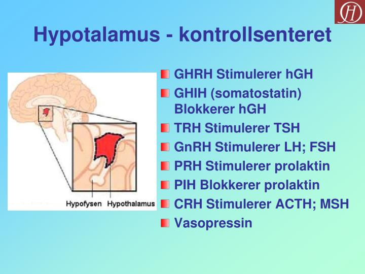 Hypotalamus - kontrollsenteret