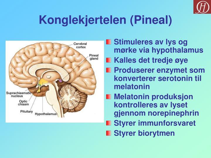 Konglekjertelen (Pineal)