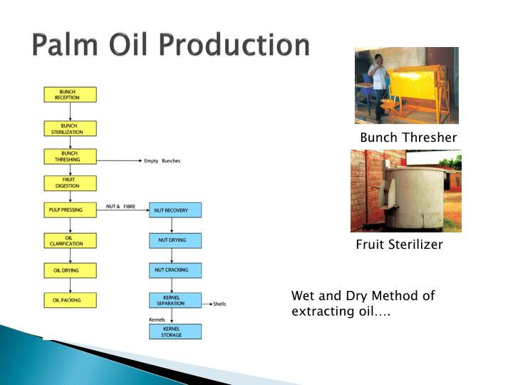 Palm oil production1