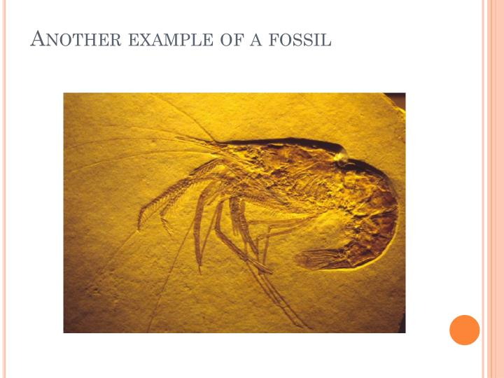 Another example of a fossil