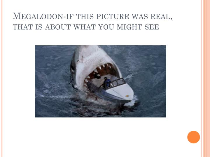 Megalodon-if this picture was real, that is about what you might see