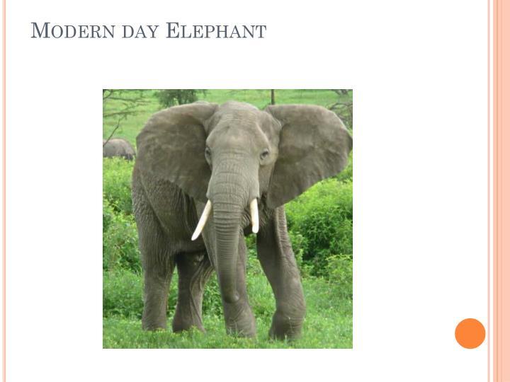 Modern day Elephant