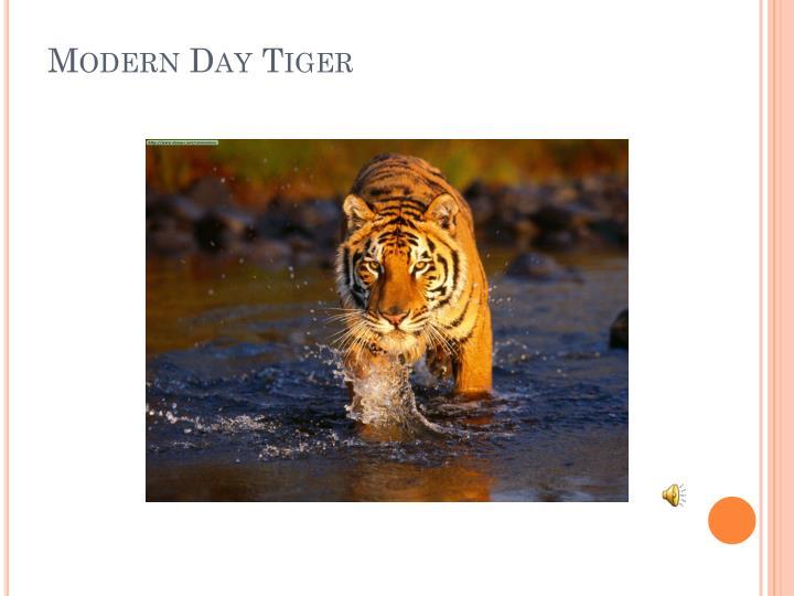 Modern Day Tiger