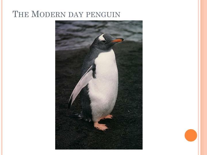 The Modern day penguin