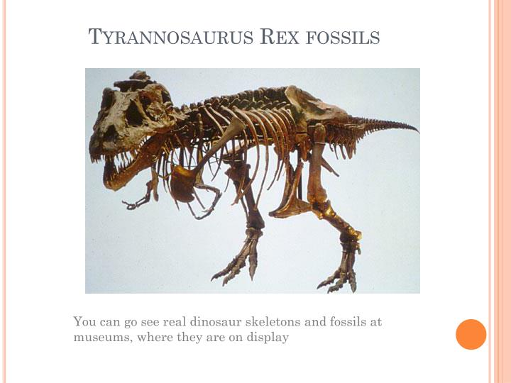 Tyrannosaurus Rex fossils