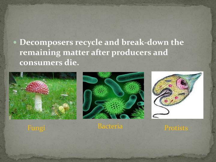 Decomposers recycle and break-down the remaining matter after producers and consumers die.