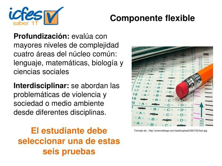 Componente flexible