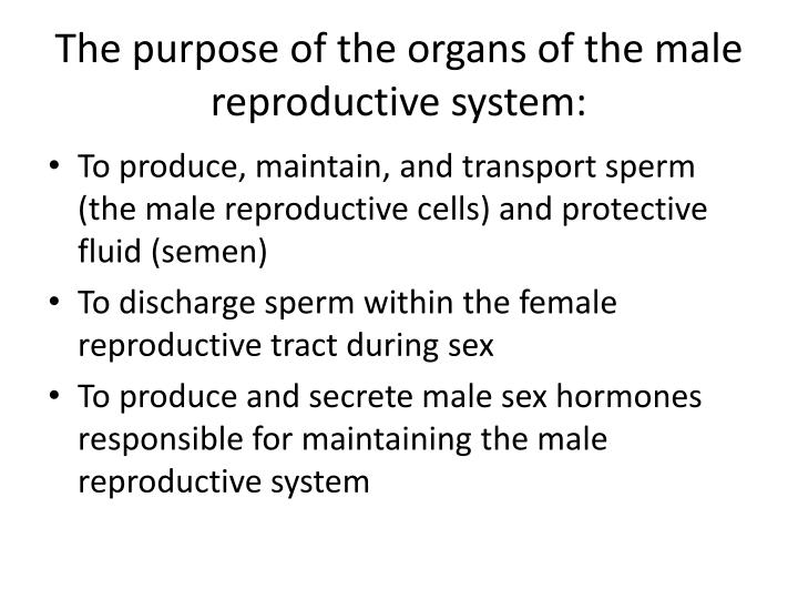 The purpose of the organs of the male reproductive system: