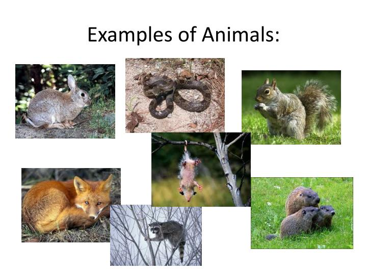 Examples of Animals: