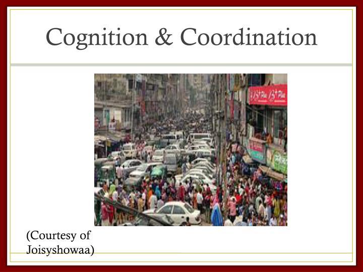 Cognition & Coordination