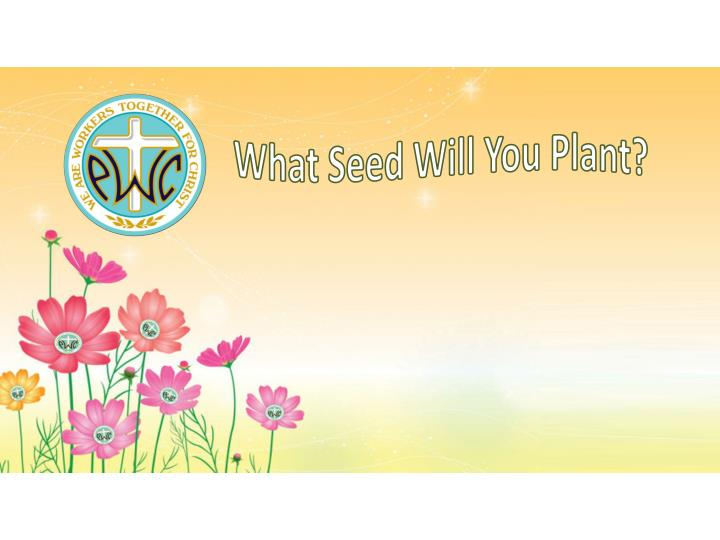 What Seed Will You Plant?
