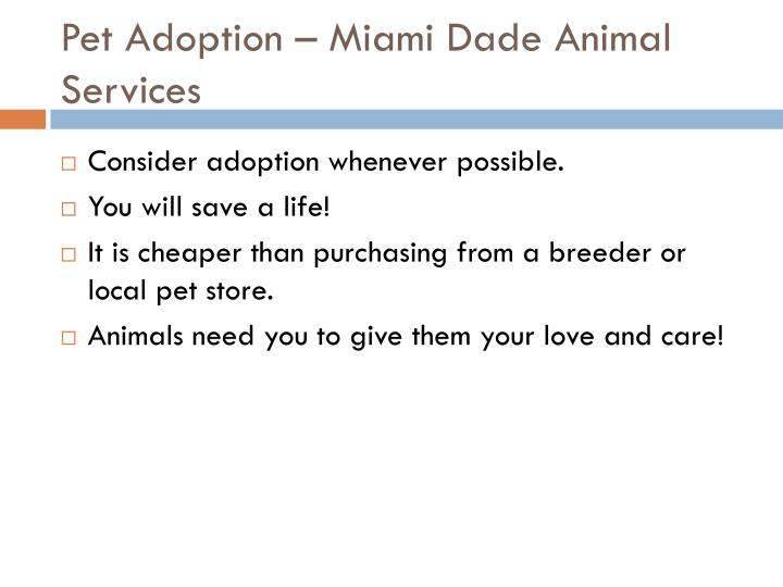 Pet Adoption – Miami Dade Animal Services