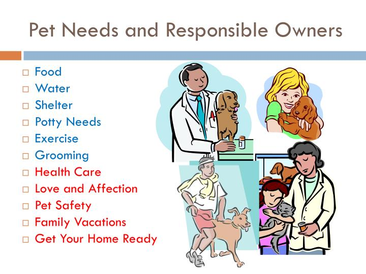 Pet Needs and Responsible Owners