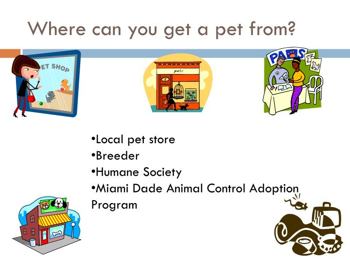 Where can you get a pet from?