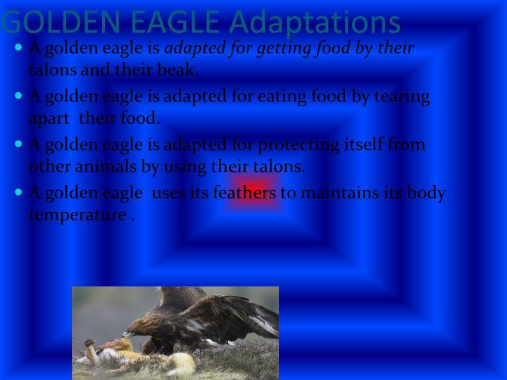 GOLDEN EAGLE Adaptations