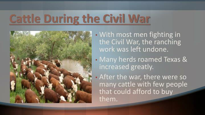 Cattle during the civil war