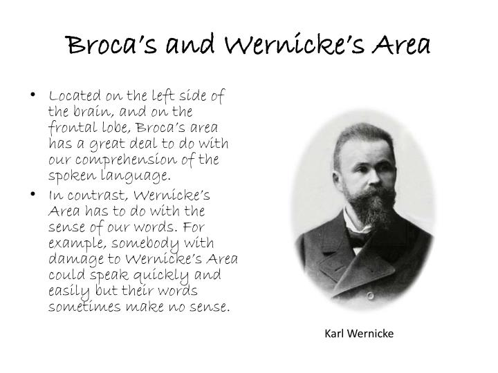 Broca's and Wernicke's Area