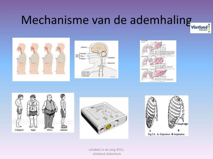 Mechanisme van de ademhaling
