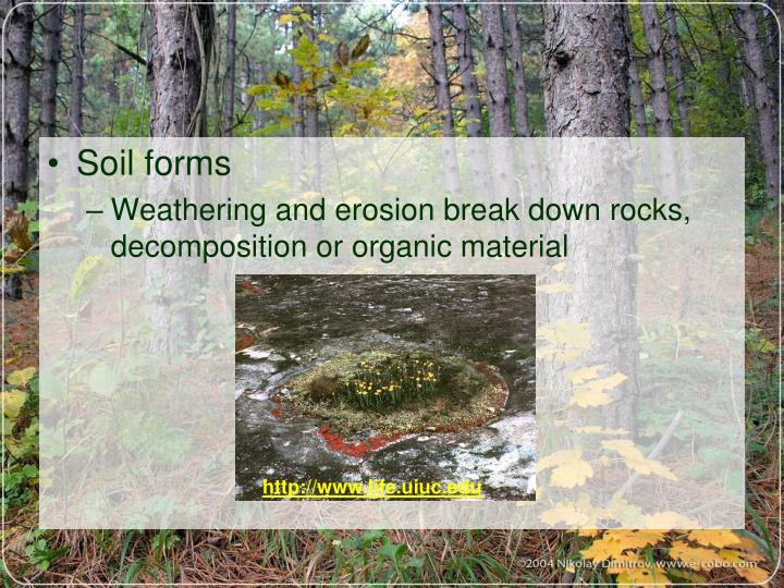 Soil forms