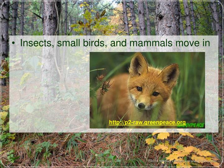 Insects, small birds, and mammals move in
